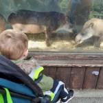 tapir &B